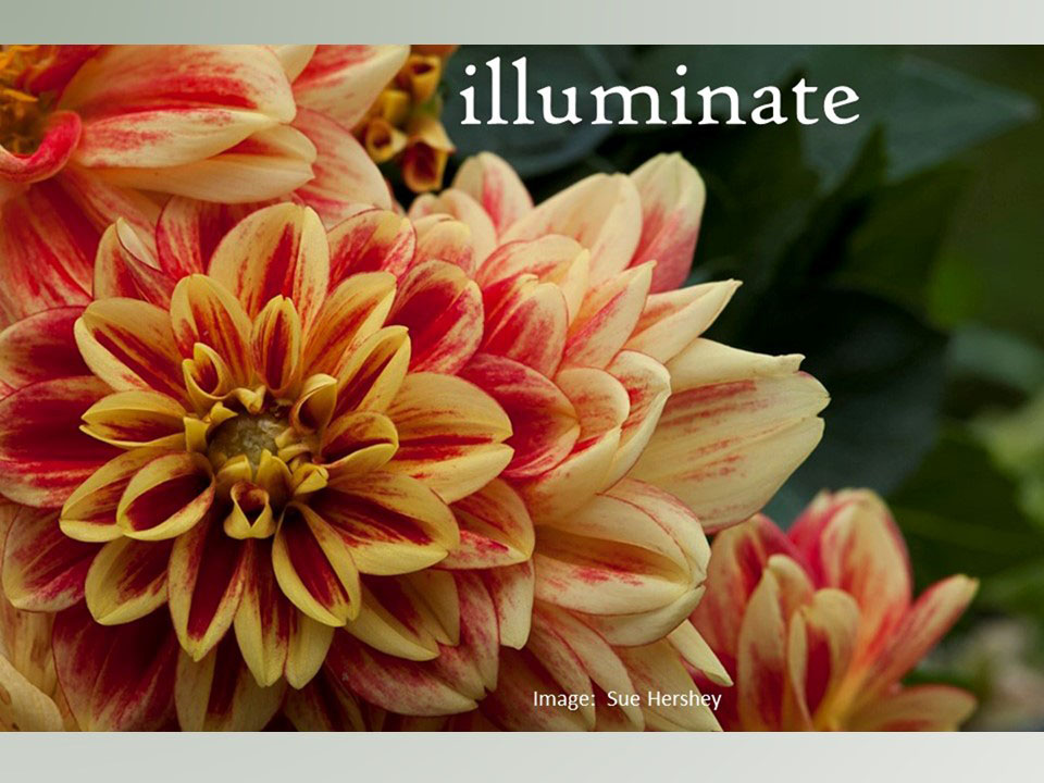 illuminate-by-sue-hershey